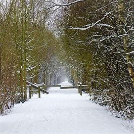 Forêt de Marchiennes