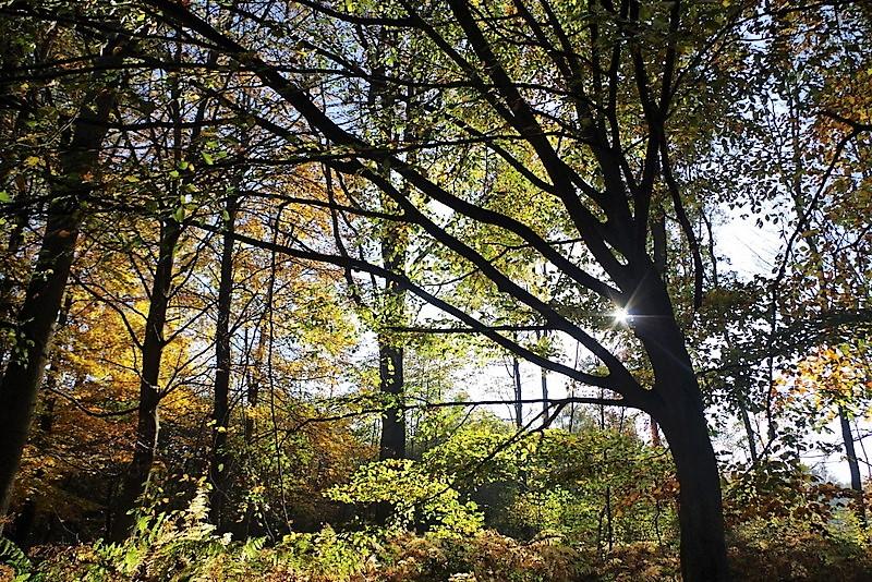 forêt marchiennes