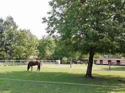 Espace chevaux