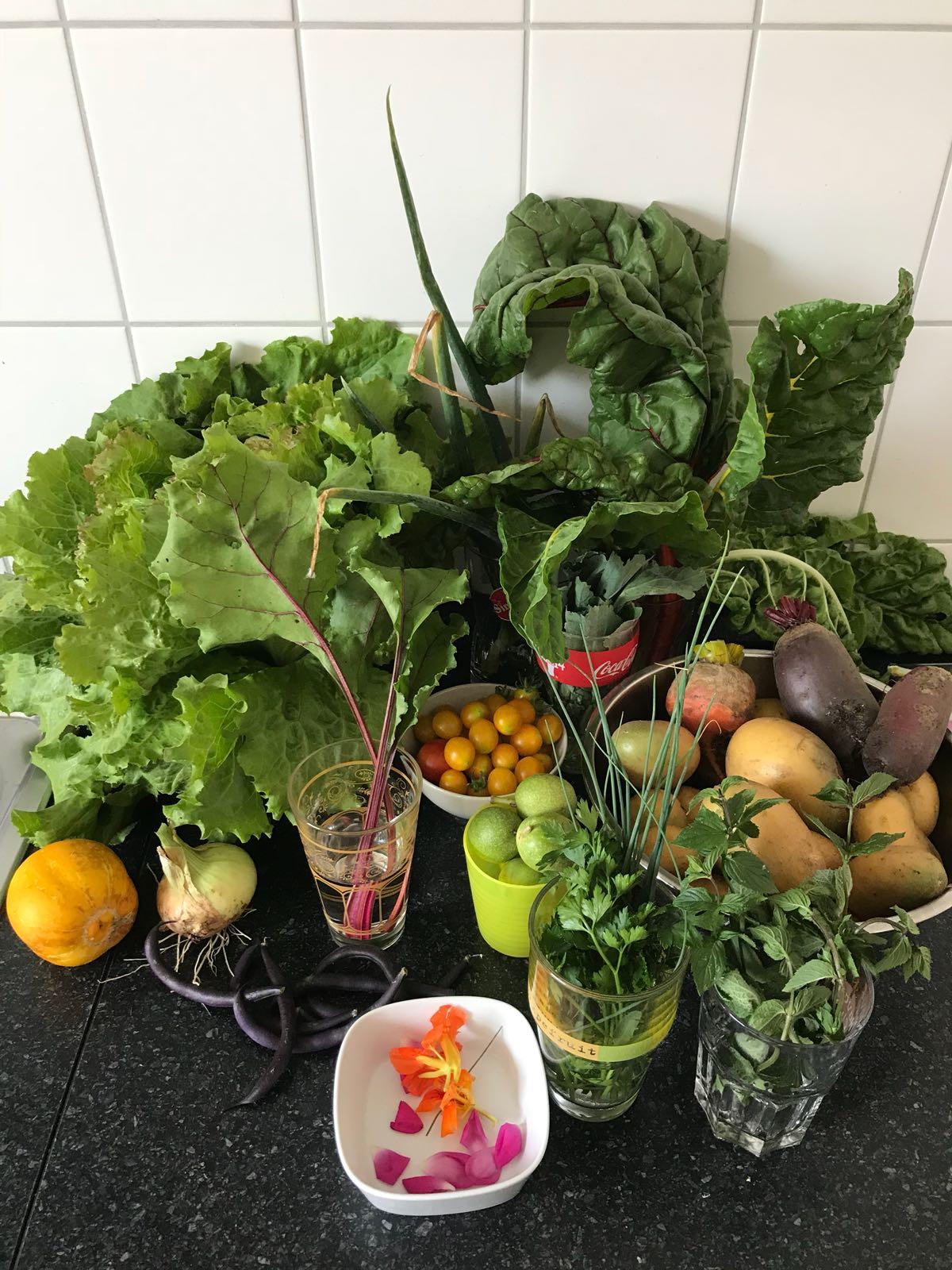 Gemüse aus dem Garten von Sebastian