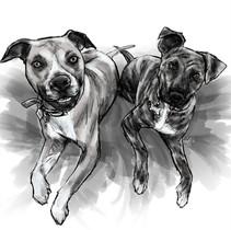 Miller Dogs