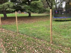 Deer Fence (2)