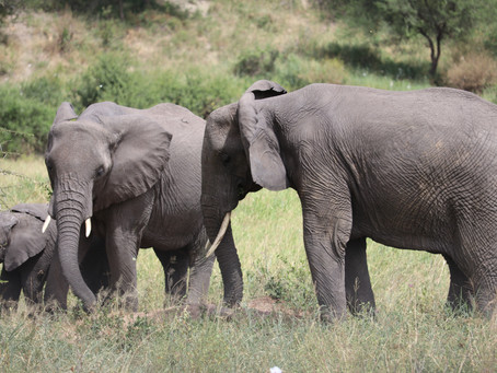 Hill Family Safari 2 - Tarangire National Park