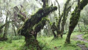 Fossey Hike - Graves in the Mist ……..and mud