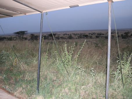 Hill Family Safari 5 - Serengeti