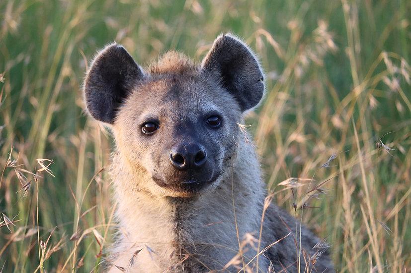 Fluffy Hyena