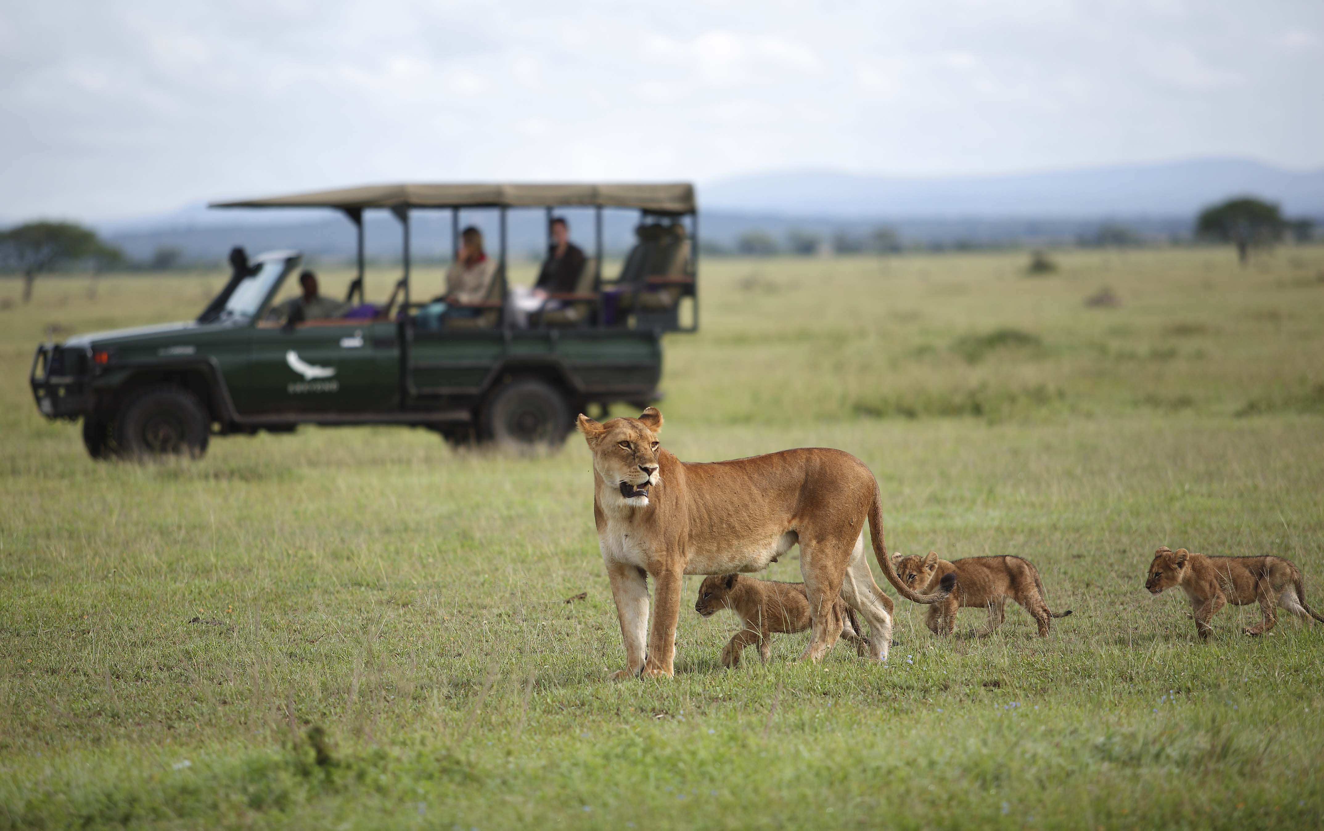 Game Drives (&Beyond)