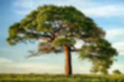 Naturaleza y Medio Ambiente.jpg