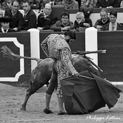 Morante ©philippelatour