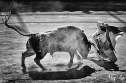 Francisco Montero©philippelatour