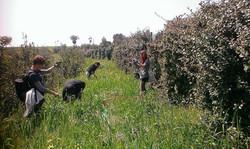 cercando erbe spontanee - Casa Masca