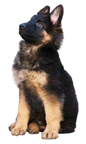german_shepherd_png_558958.png