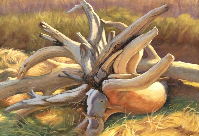 Driftwood1R