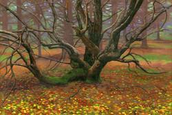 Apple TreeR