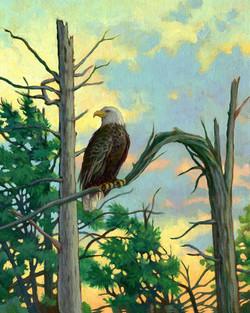 Eagle on Broken BranchR