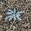 Thumbnail: Ornithoctoninae sp. mindanao oriental 1-2 instar