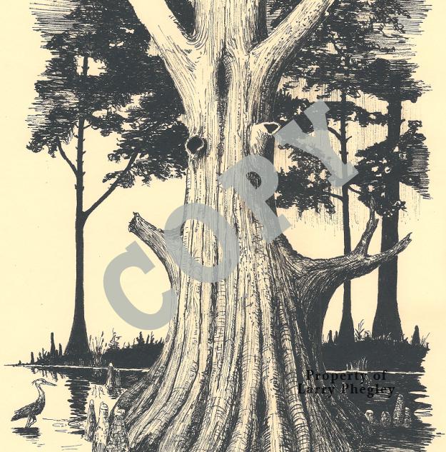 The-Big-Cypress-Tree-625x800.png