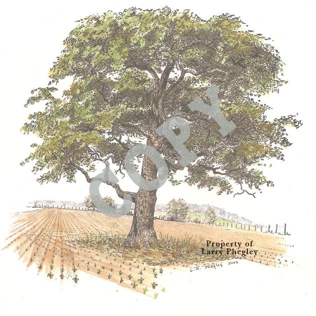 Tree-Field.png