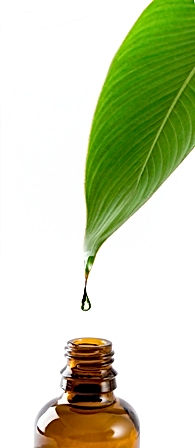 leaf drop of oil to bottle