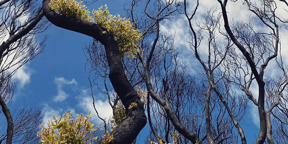 Parks Victoria Junior Rangers Program - Flora Explorers After the Bushfire