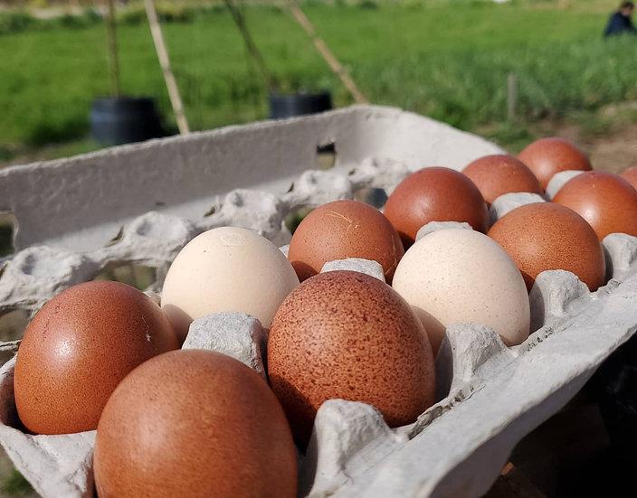 Farm Fresh Eggs (Pick Up Only) Limit 2 doz