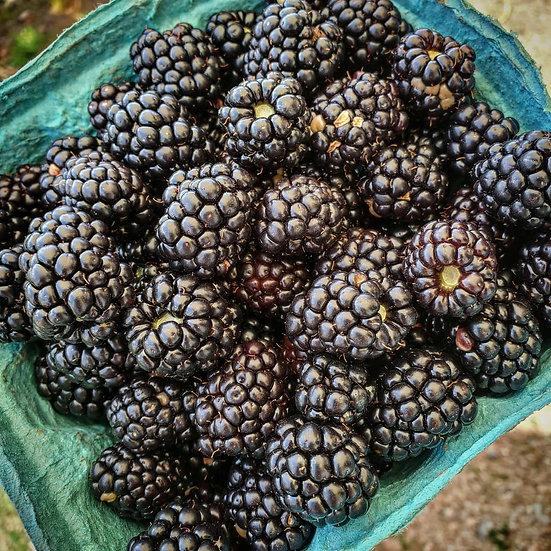 Blackberries [Quart]