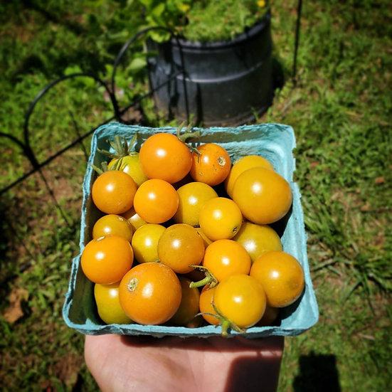 Sungold Tomatoes, quart
