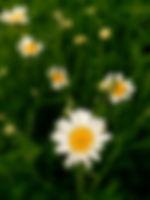 ChamFarm_edited.jpg