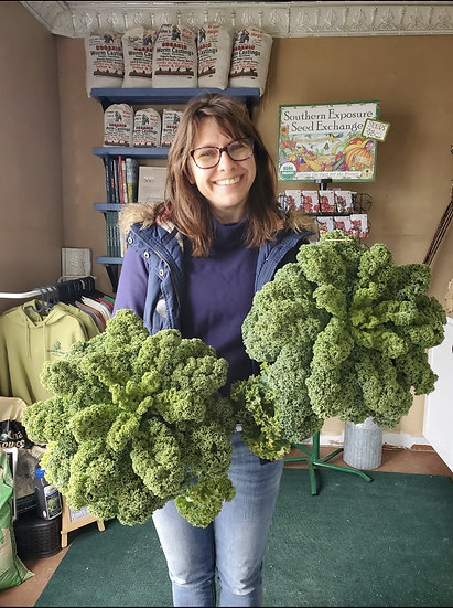 Kale Bunch, Curly
