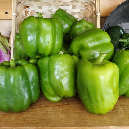 Green Bell Pepper, ea