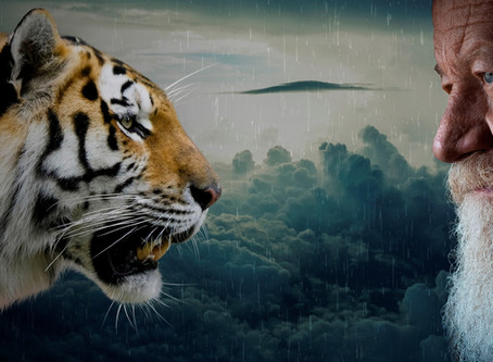 What Does the Tiger See?