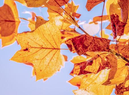Autumn Gold Fills my Spirit