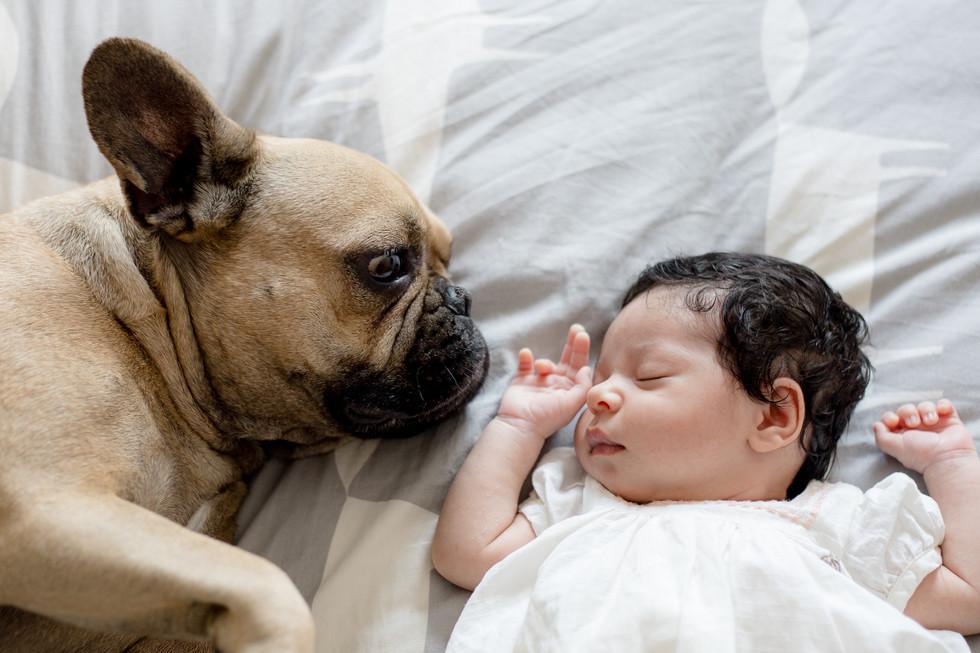 newborn baby girl and her furry dog friend