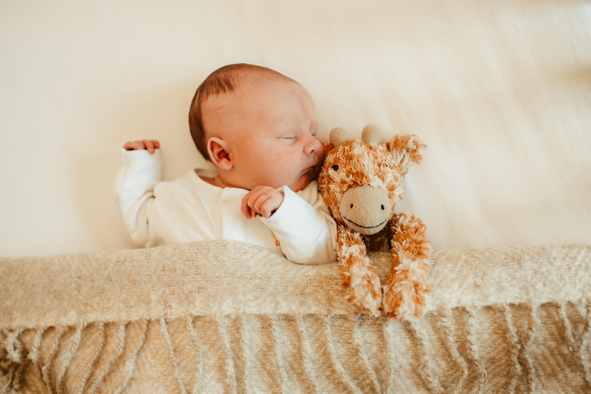 new baby boy with his toy elephant- Stephanie Atkins Photography