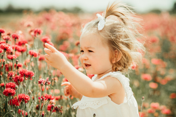 little girls picking a pink cornflower in the field