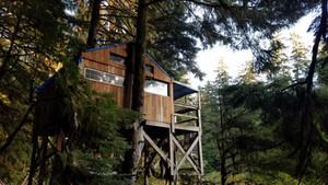 Let's Build a Treehouse!