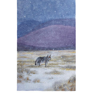 """Coyote in snow 9"""" x 11"""" watercolor SOLD"""
