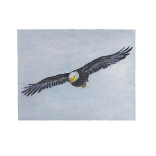 """Eagle flying 9"""" x 5"""" acrylic on paper"""