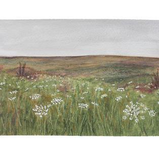 """Queen Anne's field 12"""" x 9"""" watercolor"""