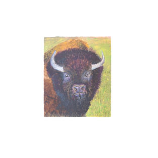 "Buffalo portrait 5"" x 9"" acrylic on paper"