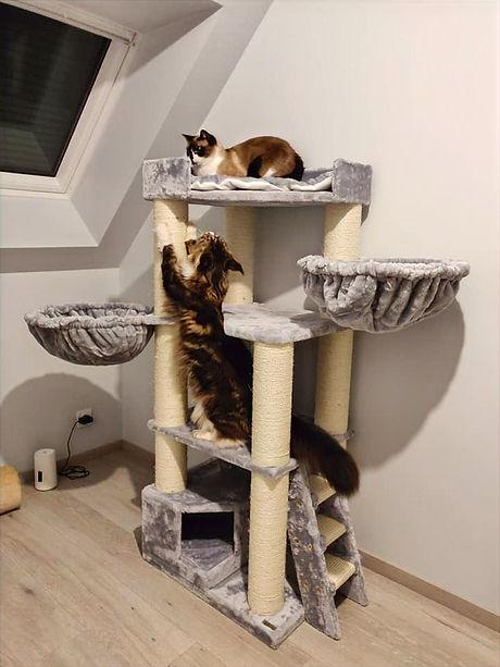 Arbre à chat cattree
