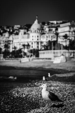 Promenade des Anglais.