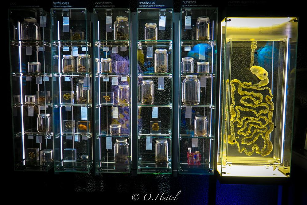 Le musée Micropia et tous ses microbes!