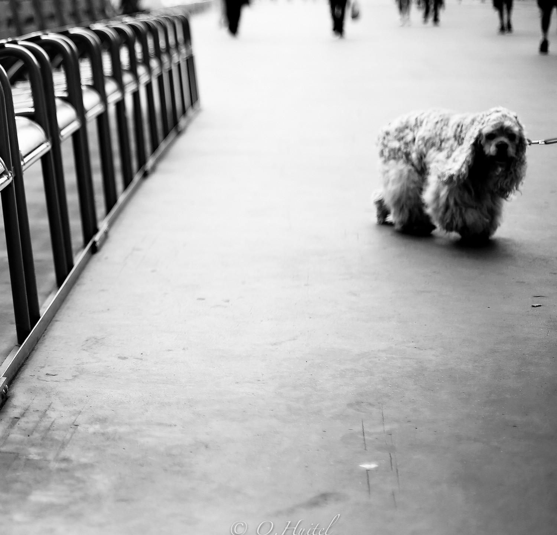 La Promenade des Anglais.