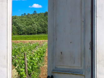 L'art du vin à Peyrassol