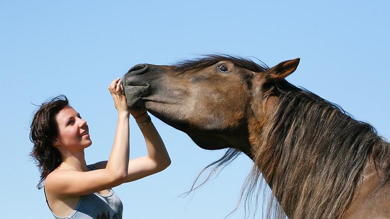 Inspiratie-sessie met paarden