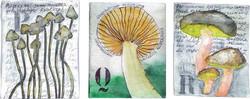 Abecedarium mycelum-6.jpg