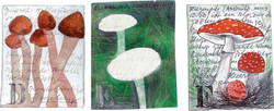 Abecedarium mycelum-2.jpg