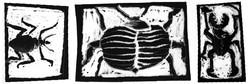 käfer3.jpg
