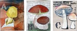 Abecedarium mycelum-1.jpg